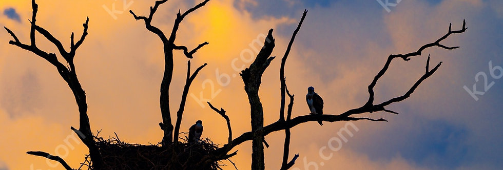 Osprey nest at sunset