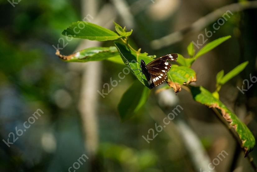 Butterfly in the wetlands