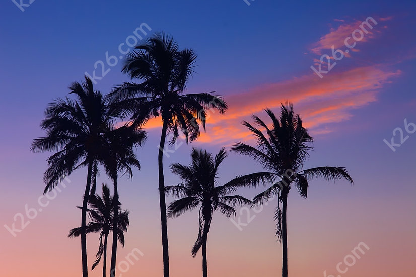 Palm trees against the sunset