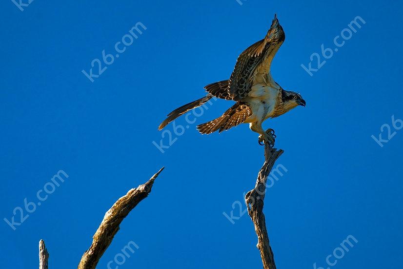 Osprey balancing