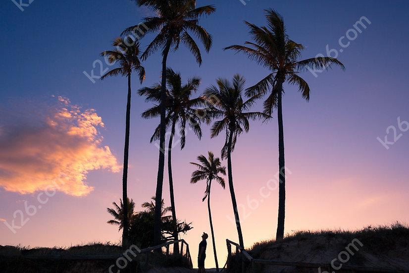 Palm trees at Main Beach