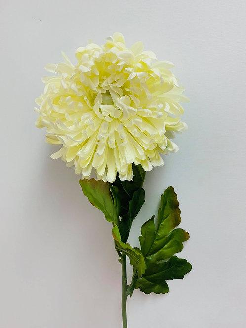 Chrysanthemum SunShine Yellow