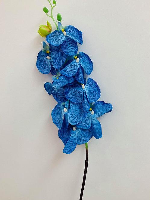 Phalaenopsis Orchid Azure