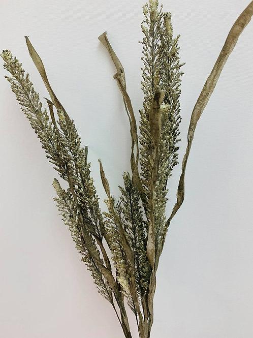 Preserved Fern Sage