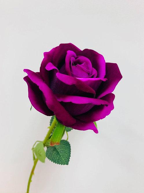 Sofia Purple Rose