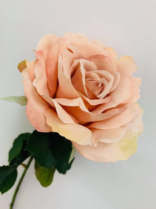 Avery Pink Rose