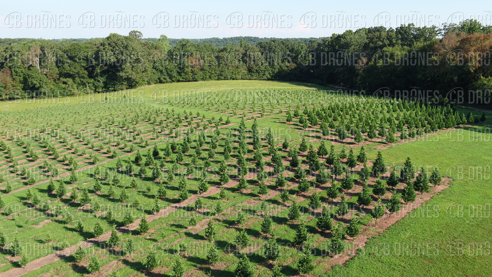 7 G's Tree Farm