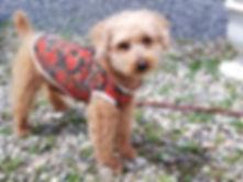 ハンドメイドの犬の服を販売する店
