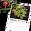 Thumbnail: Island County Master Gardener 2022  Calendar