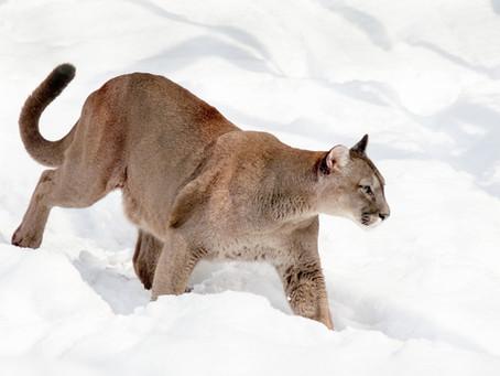 So... A Puma Inspired Me!