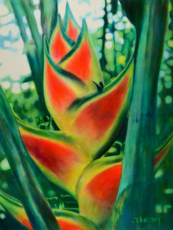 Heliconia Wagnerians