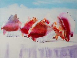 Conch in a Row