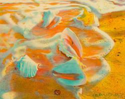 Sea Foam Conch