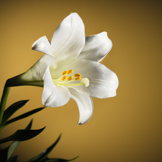 Easter Lily-30-Edit.jpg