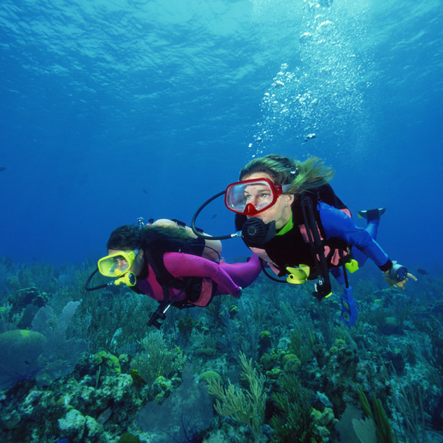 Dive Company Wien