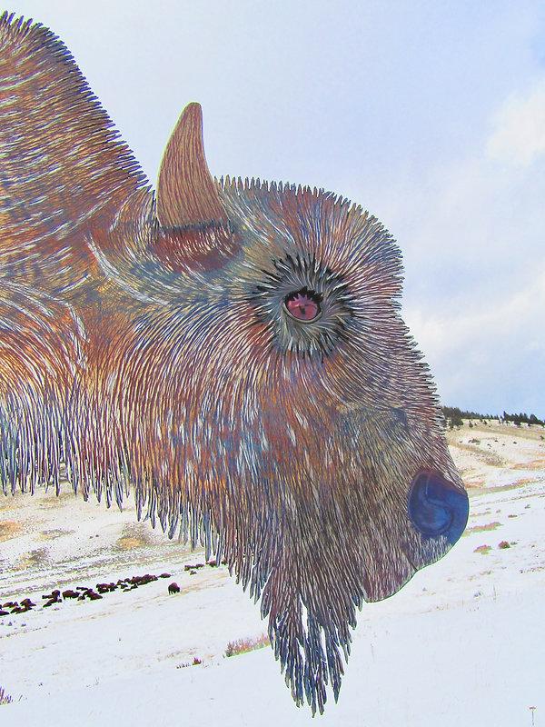 Buffaloed on the Mountain.jpg