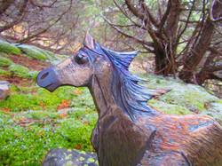 Morgans Horse