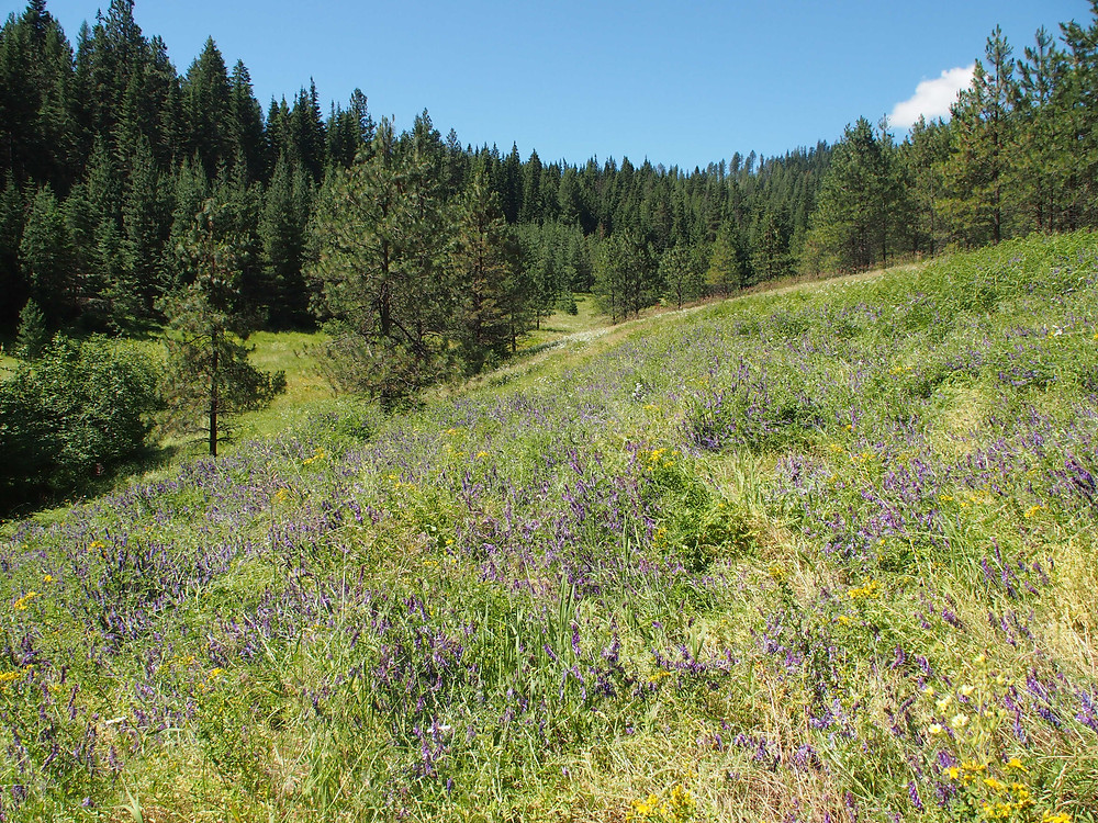 Meadow and forest at Cedar Springs Ranch