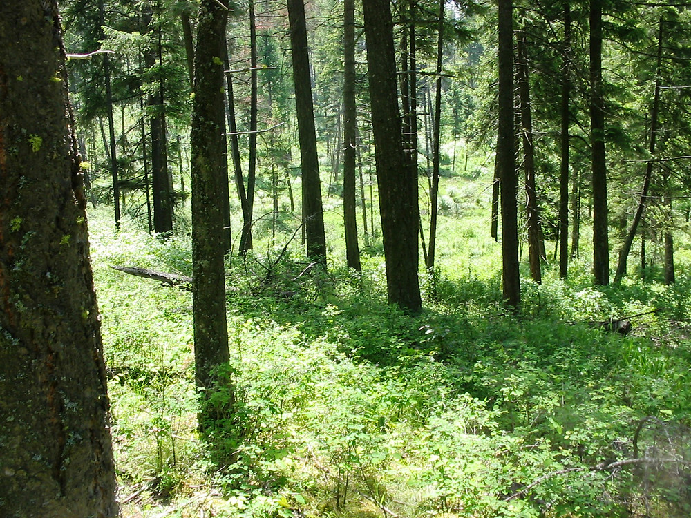Forest at the Susan Camp easement near Colbert