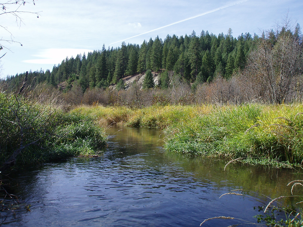 The Verbrugge property is one of the headwaters to the Little Spokane River. It is protected with an INLC conservation easement.
