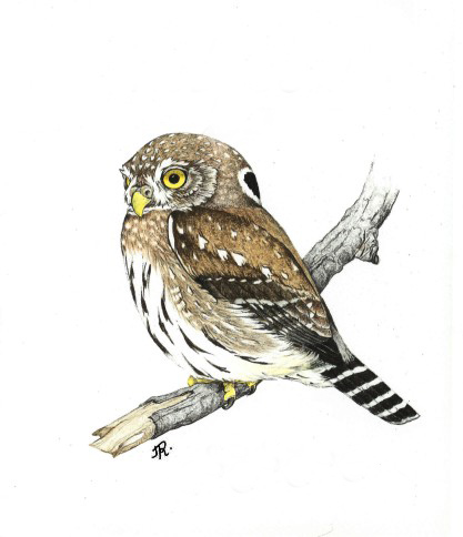 Spokane Audubon Society