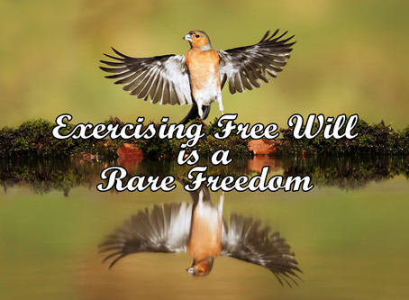 Exercising Free Will is a Rare Freedom - Interesting Articles for Interested People