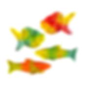 pesci_colorati.jpg