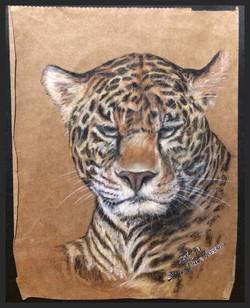 'Leopard Study'