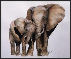 'Elephant Study'