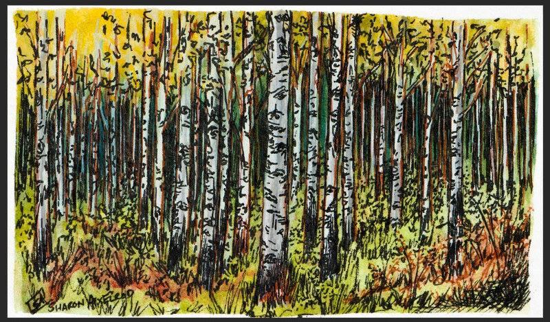 'Birch Forest'