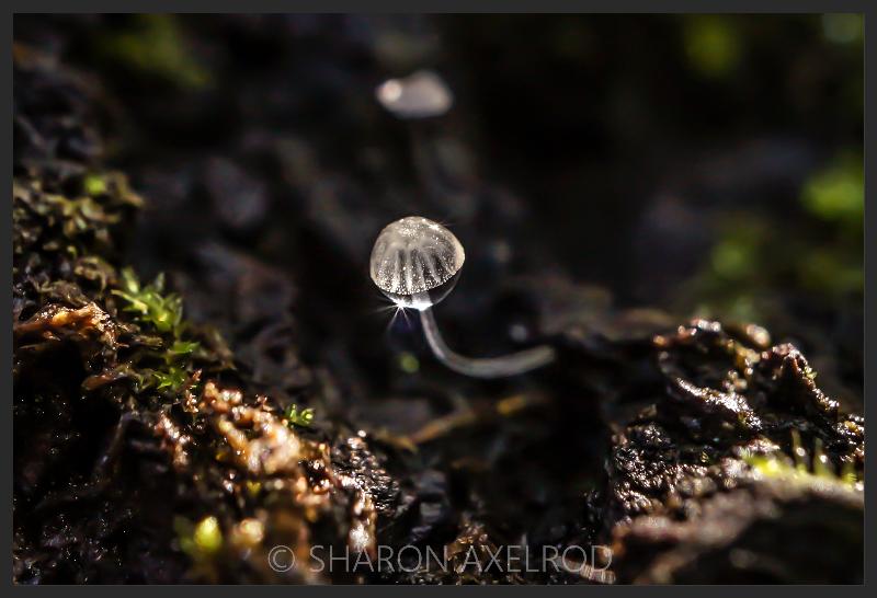 'Mushroom Waterdrop'