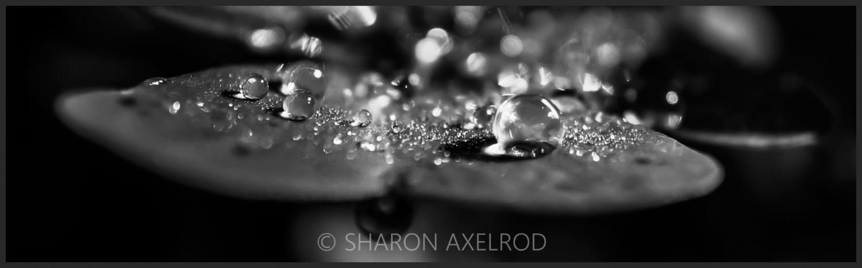 'Luck of the Rain'