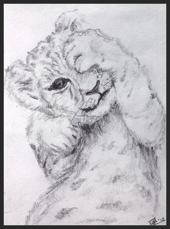 'Lion Cub'