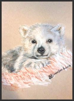 'Polar Bear Cub'
