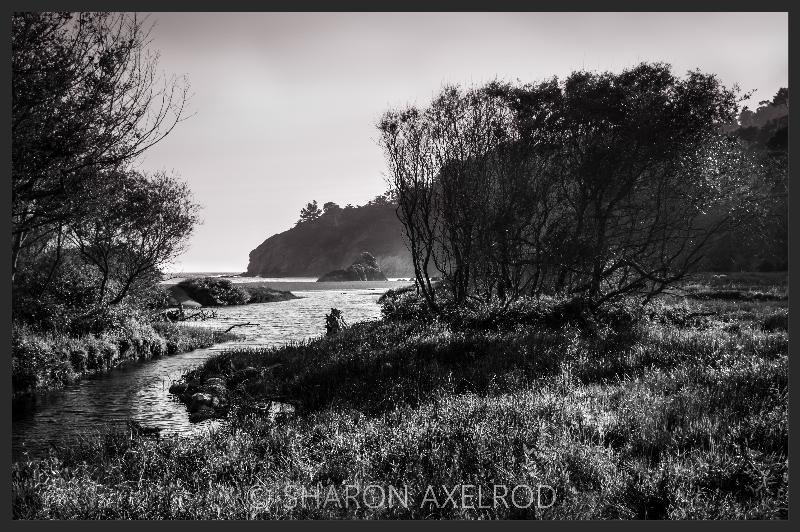 'Muir Beach Marsh'