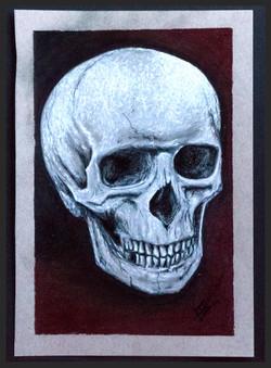 'Skull Study'