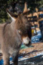 Donkey Profile ish.jpg