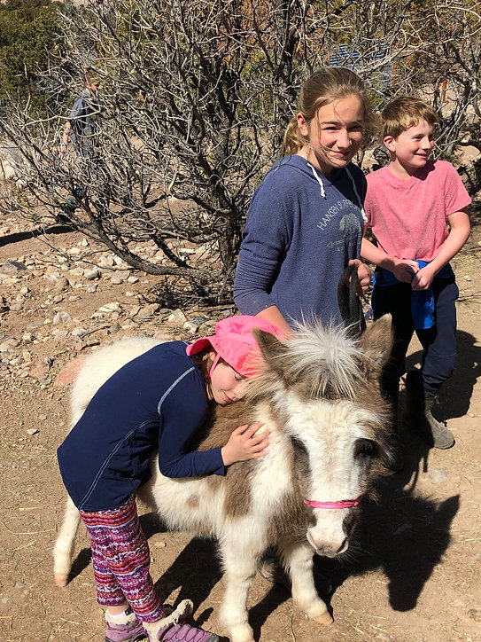 A smiling young girl hugs a miniature mule while 2 older children look on.