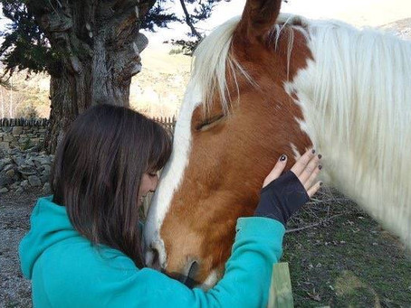 THEY KISS HORSES DON'T THEY...