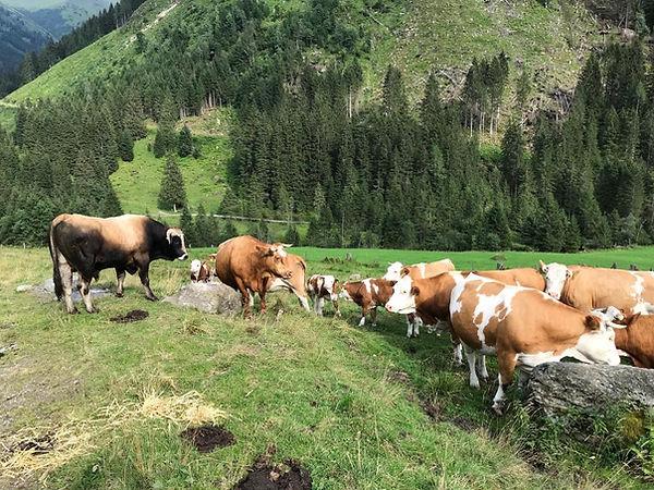 Rinder aus der Kleinsölk Steiermark, Sebastian Zörweg