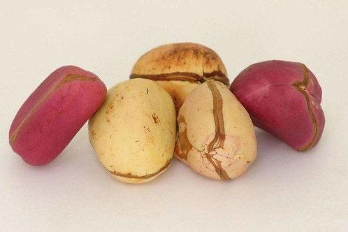 Kola Nut ( Used To Pray)