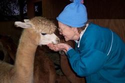 Alpacas are gentle