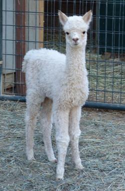 Hope one week old