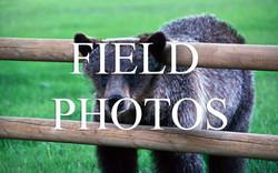 Kelsey-Field--Photo-Title