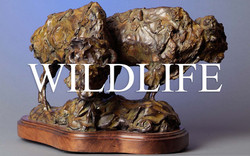 Kelsey-Wildlife-Gallery