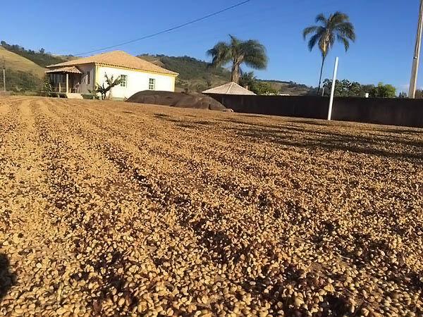 Terreno de secagem de Café