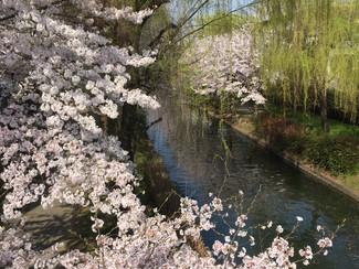 春です !!