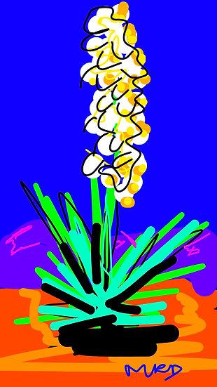 Yucca Blue