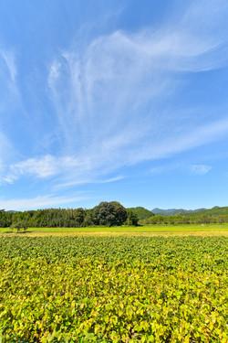 篠山市日置の畑