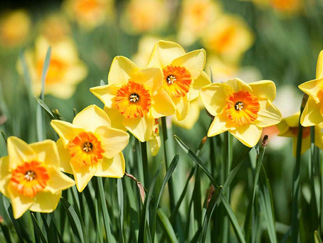 Let's Celebrate Spring!